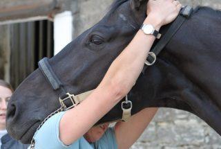 horse-head-chiro-8758